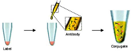 流式细胞术以及荧光